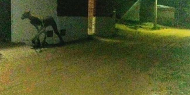 Vatandaşlar korku içinde! Akşam saatlerinde görüntülendi…